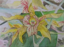 orchidee3 15X20cm